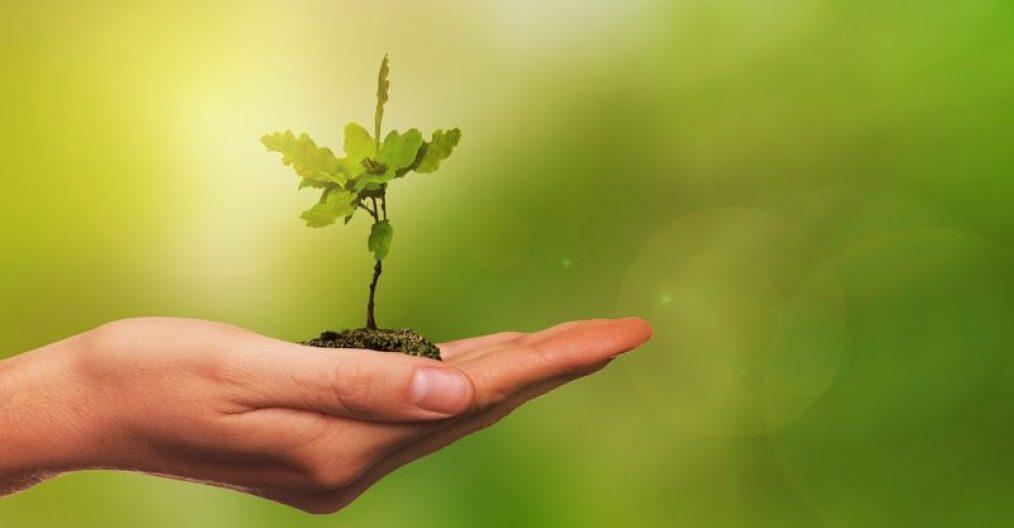 Hand-Selbstwirksamkeit-pflanze-pb-cc-800x445